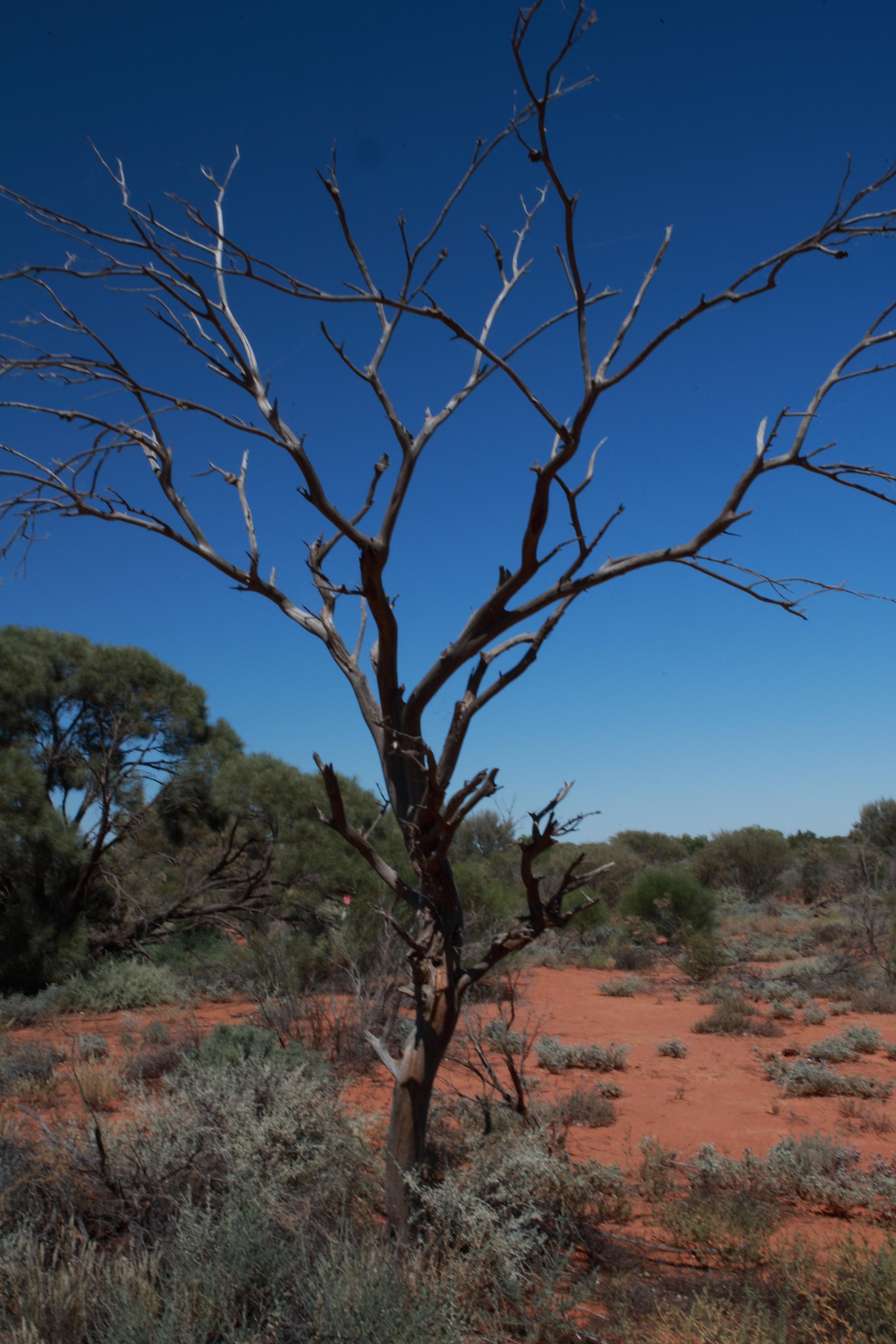 Australia_Outback_10