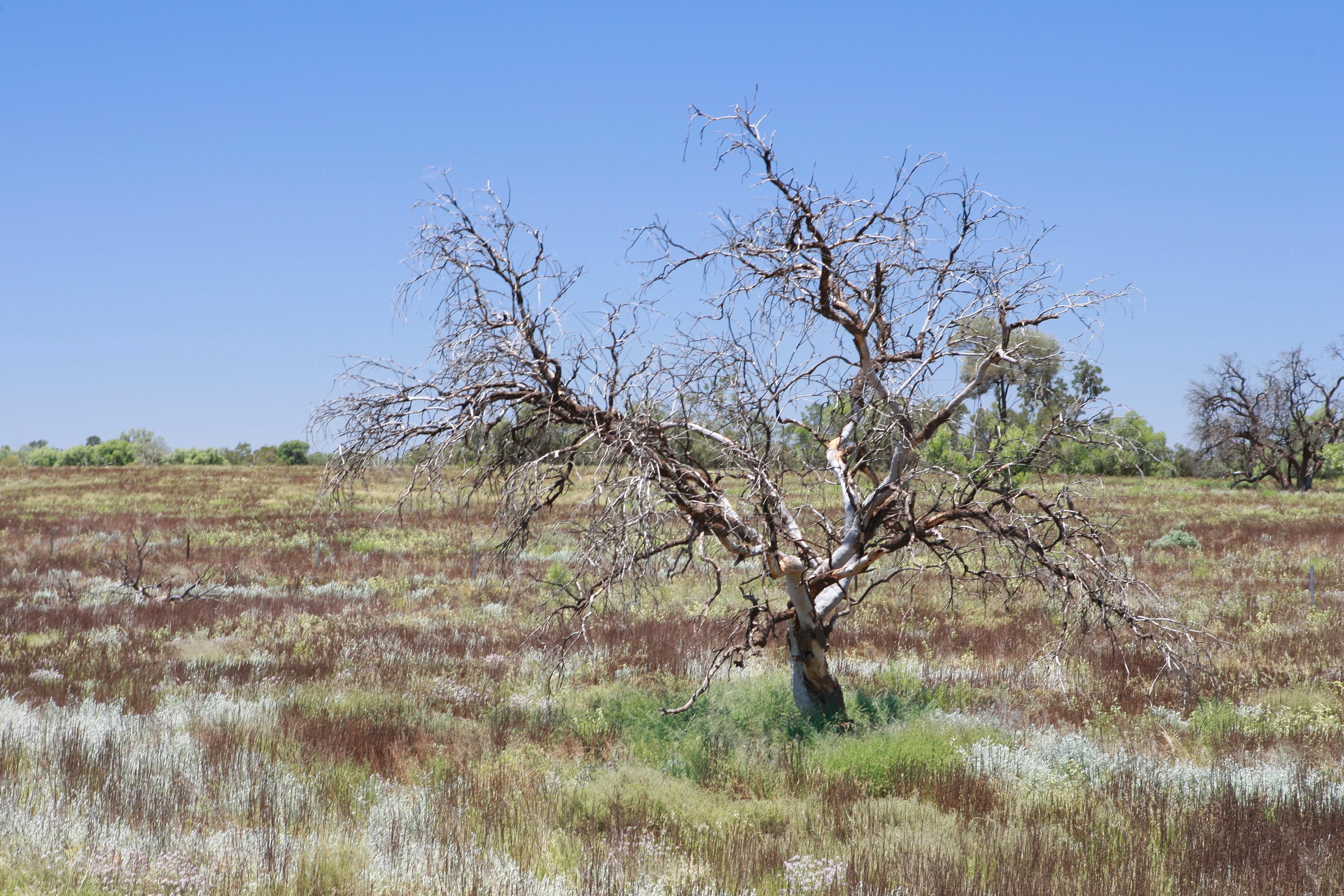 Australia_Outback_19