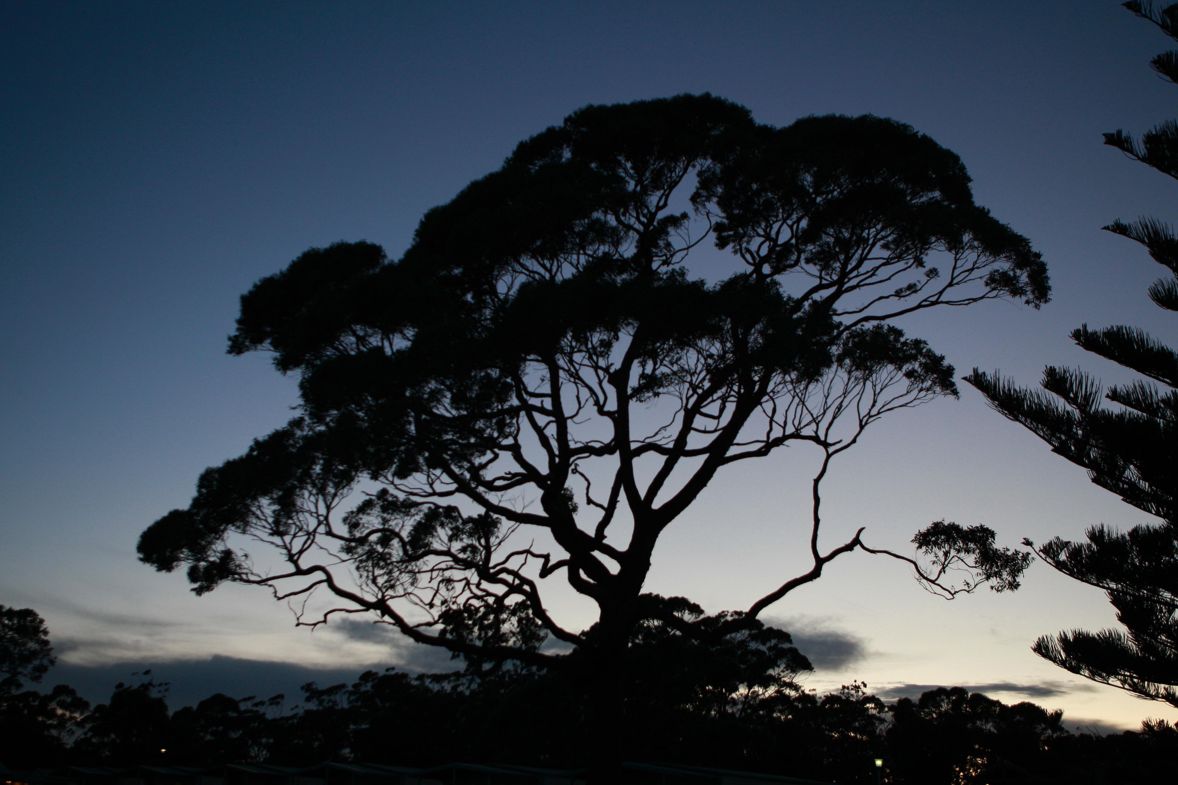 Australia_Outback_38