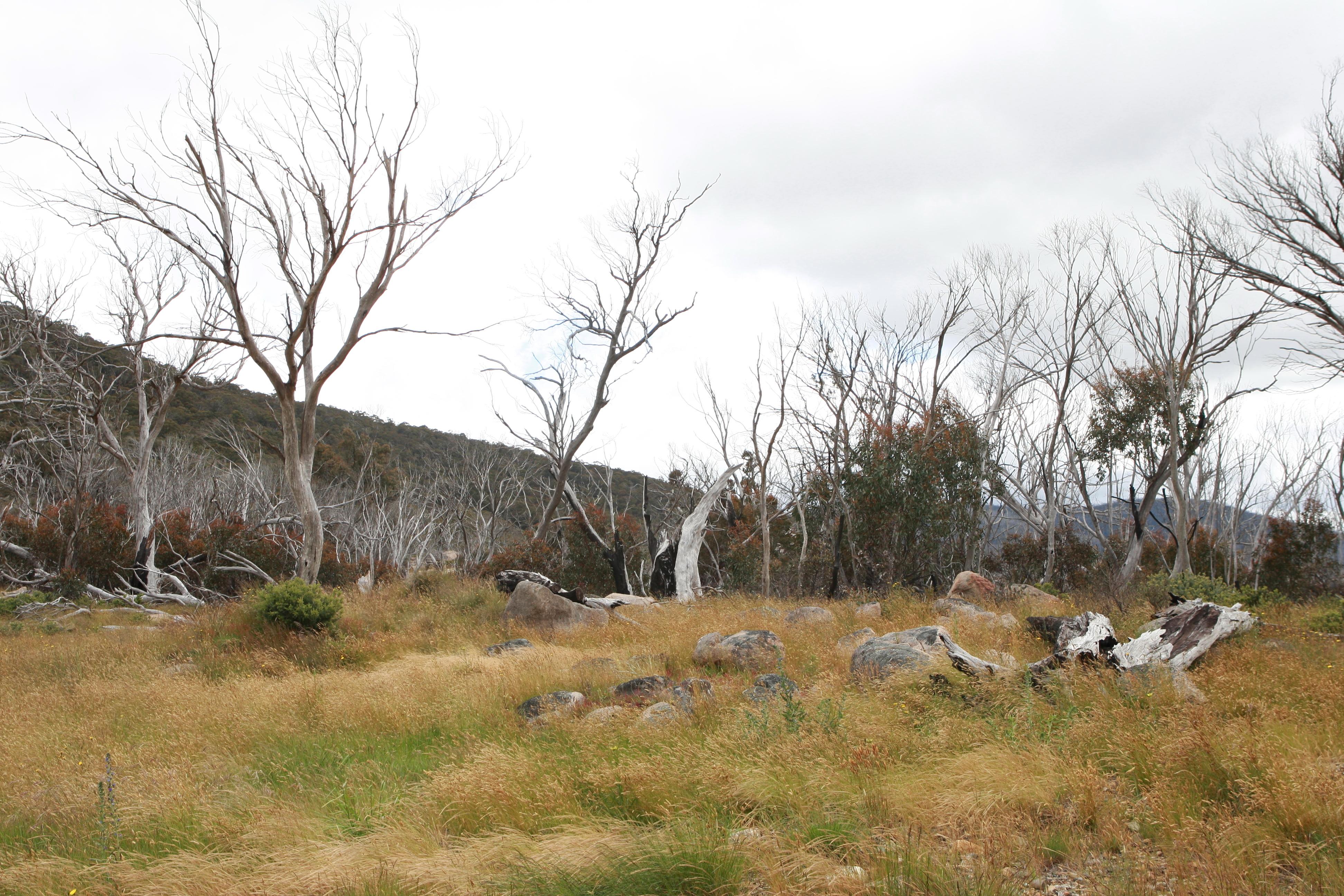 Australia_Outback_41