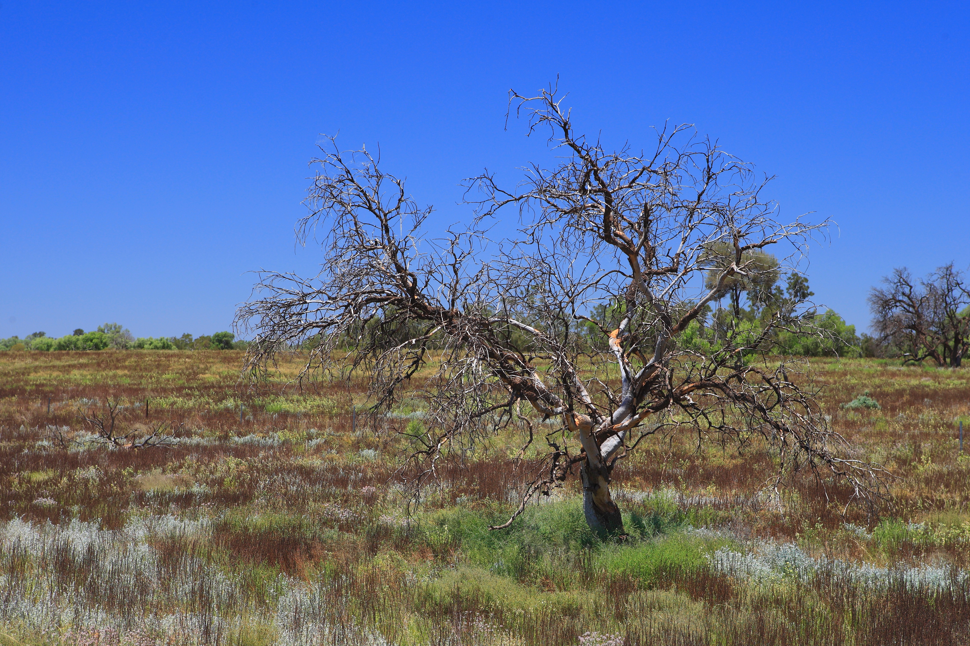 Australia_Outback_64