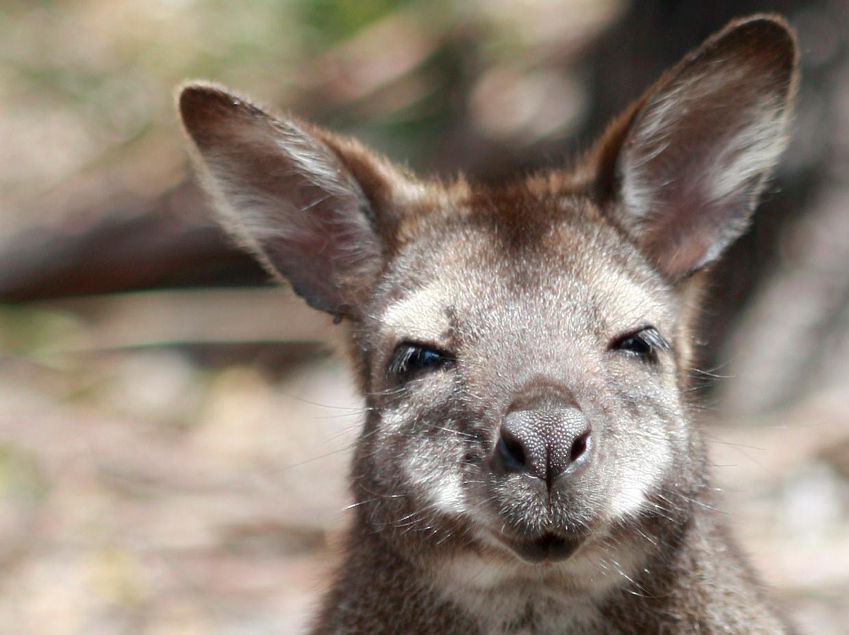 Australia_Wildlife_02