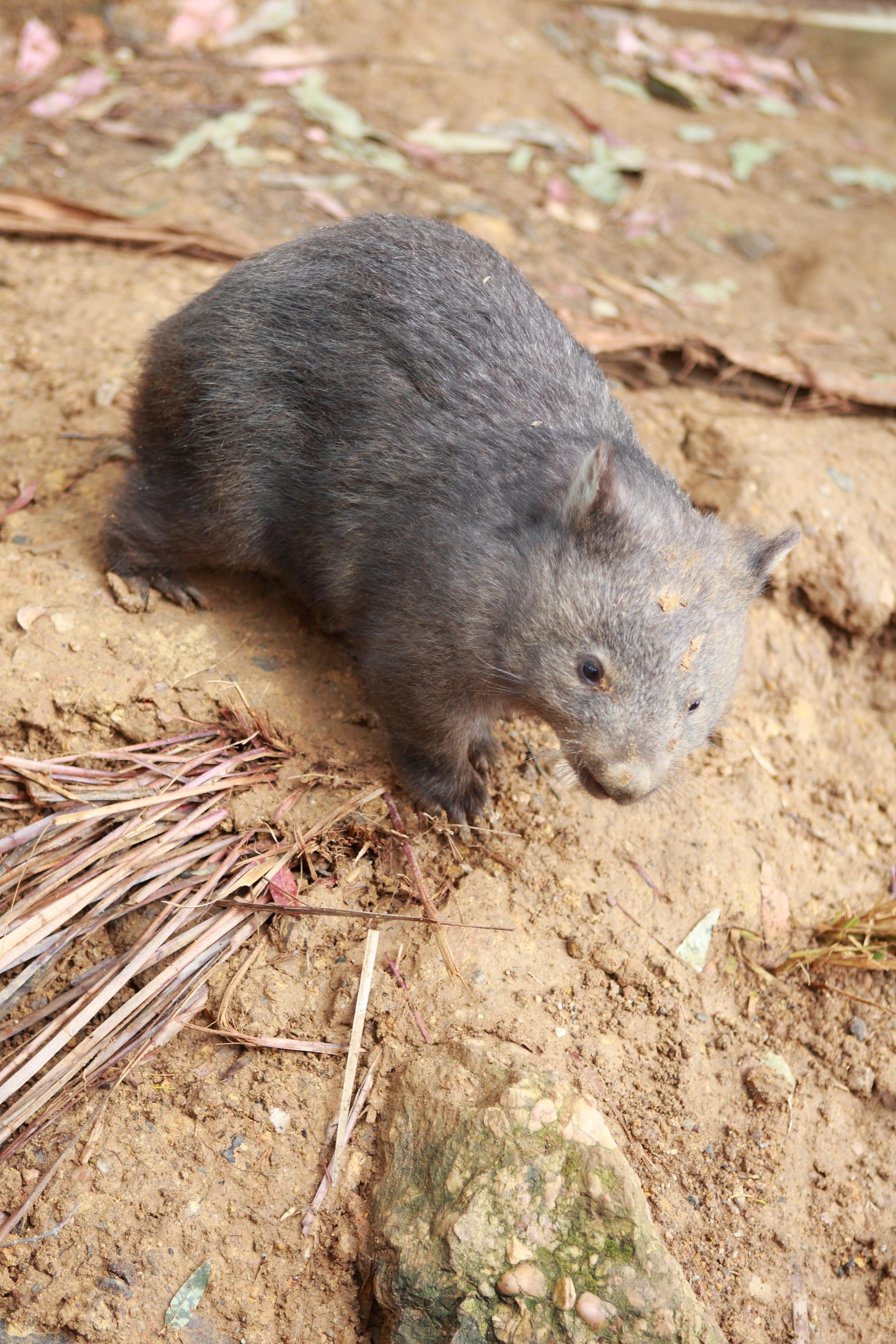Australia_Wildlife_03
