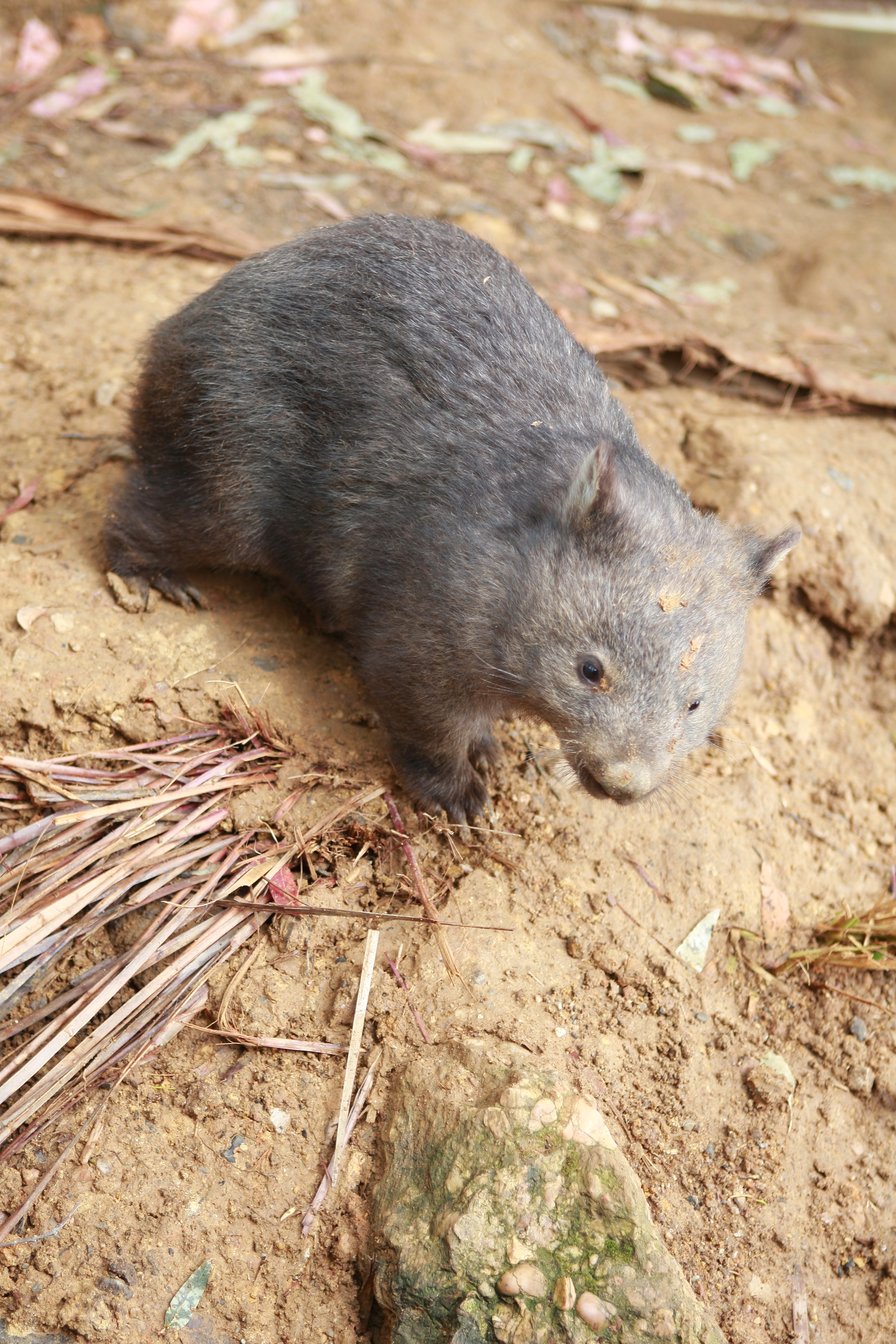 Australia_Wildlife_04