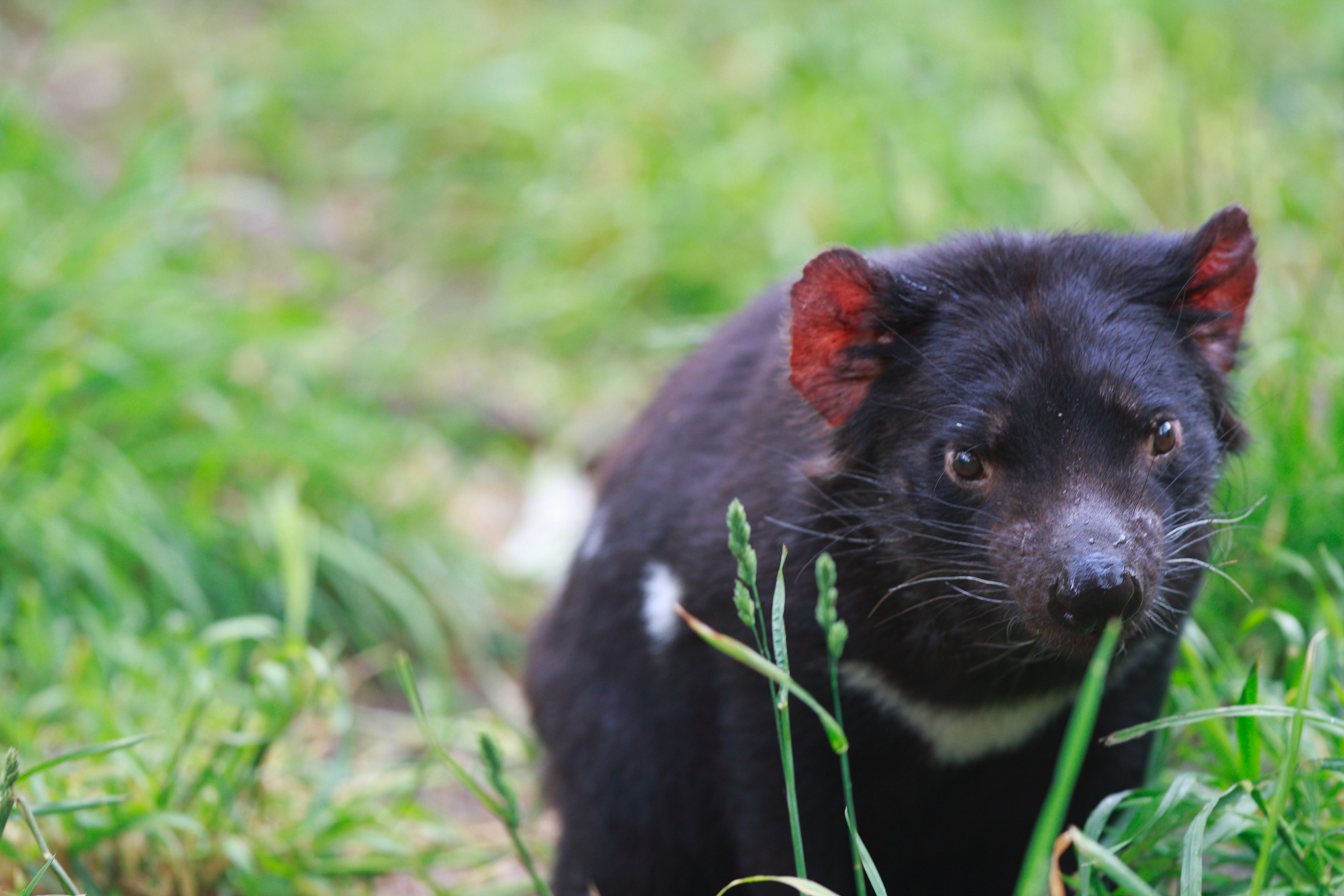 Australia_Wildlife_109