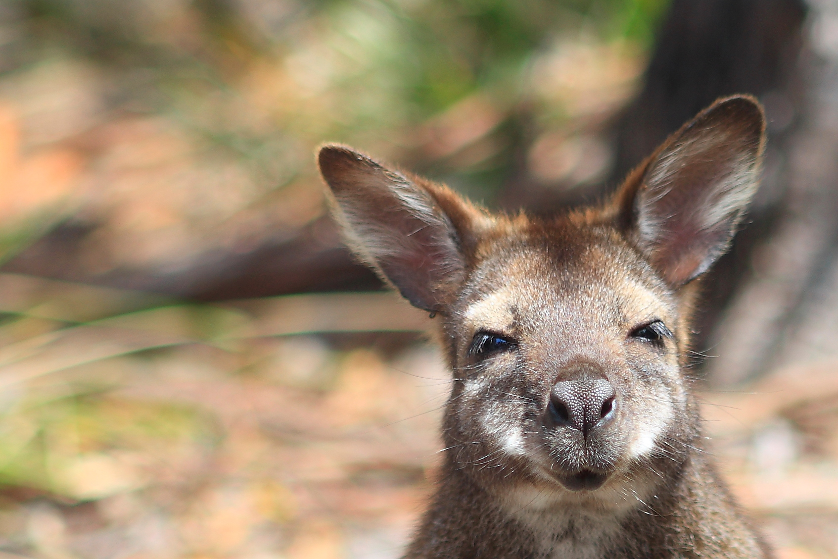 Australia_Wildlife_115