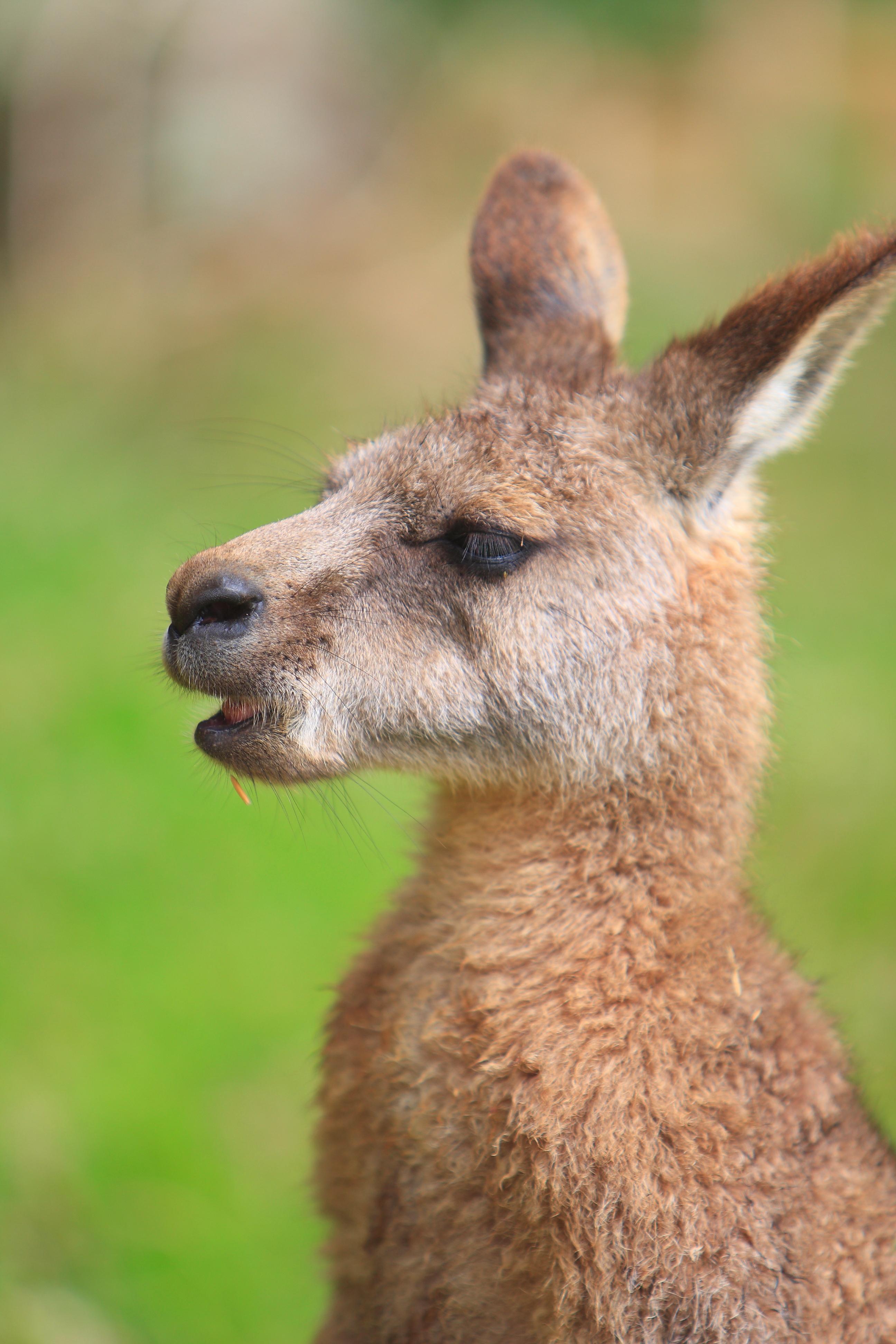 Australia_Wildlife_117