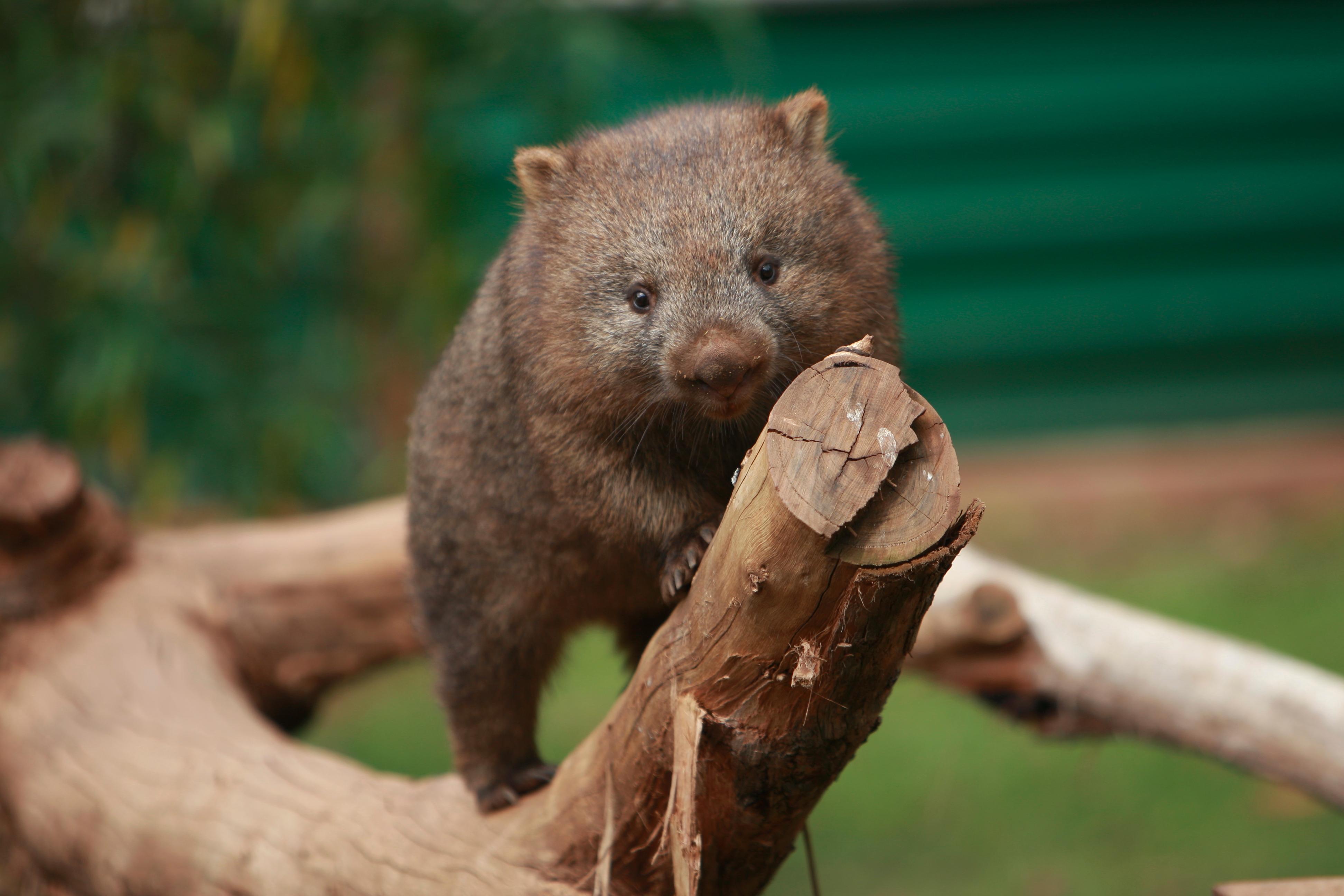 Australia_Wildlife_16