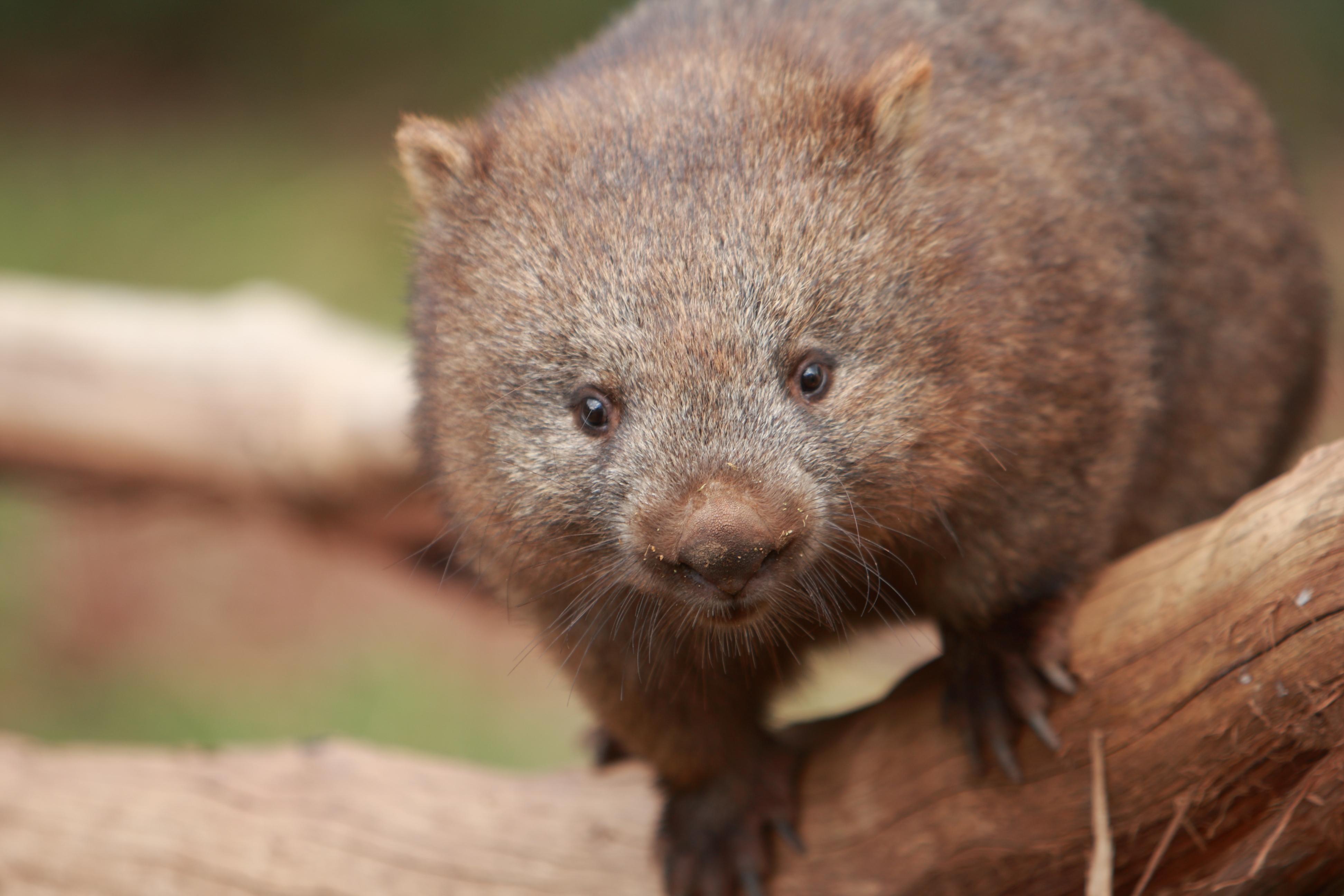 Australia_Wildlife_19