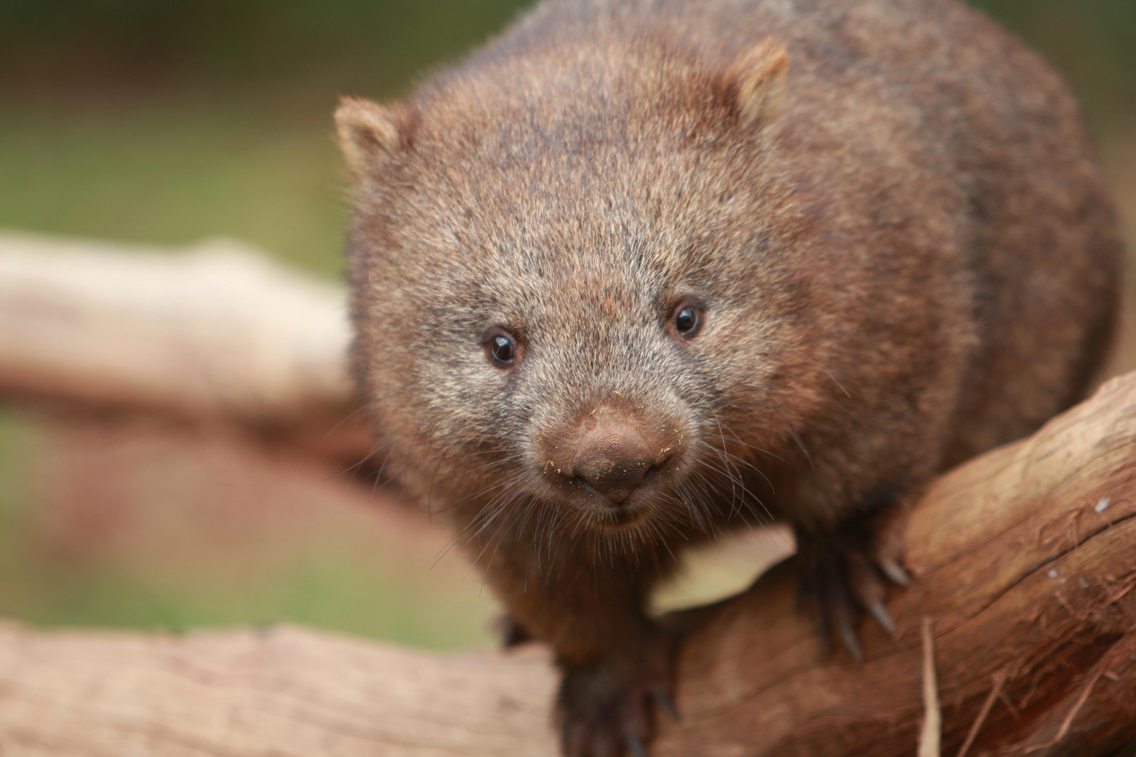 Australia_Wildlife_20