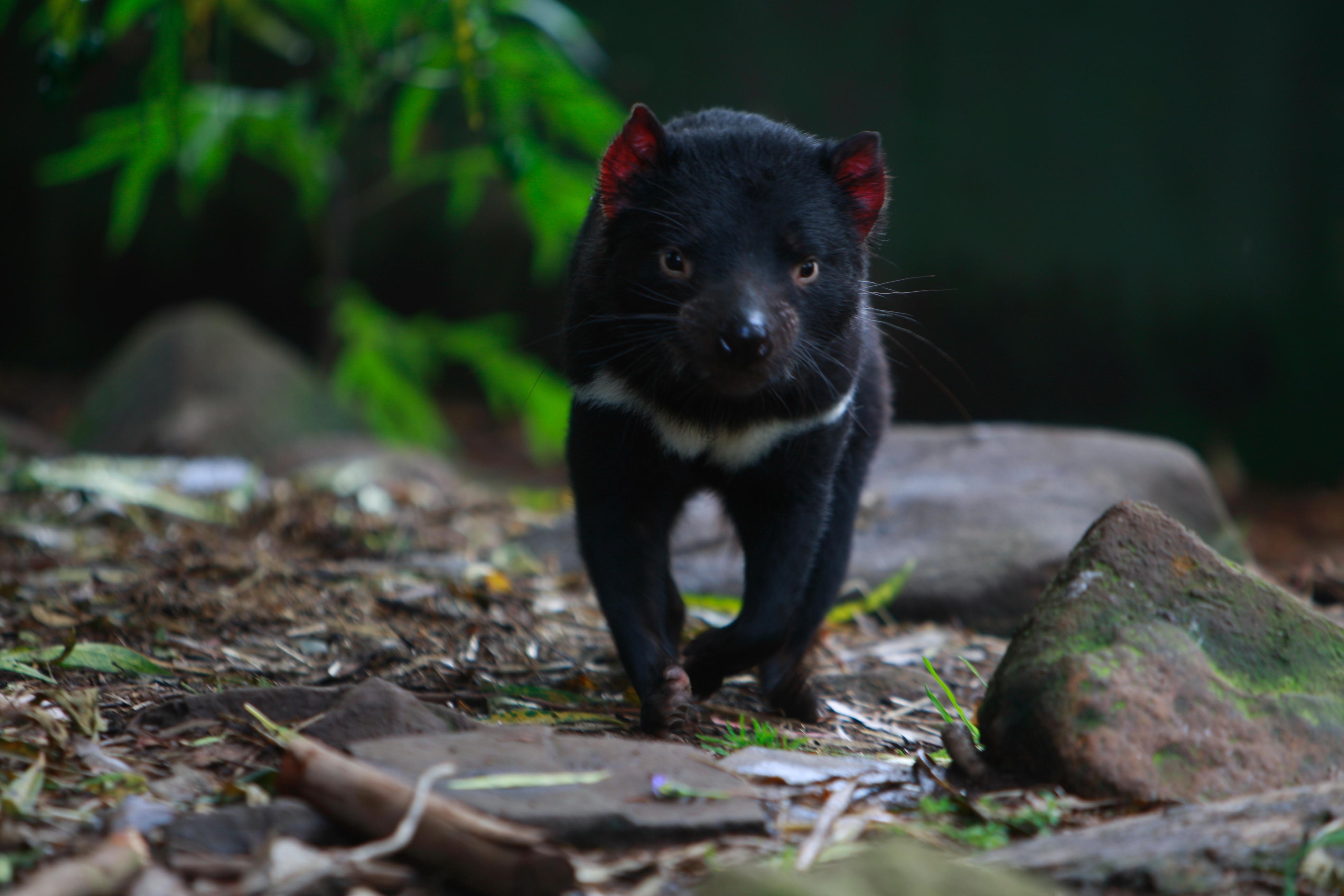 Australia_Wildlife_21