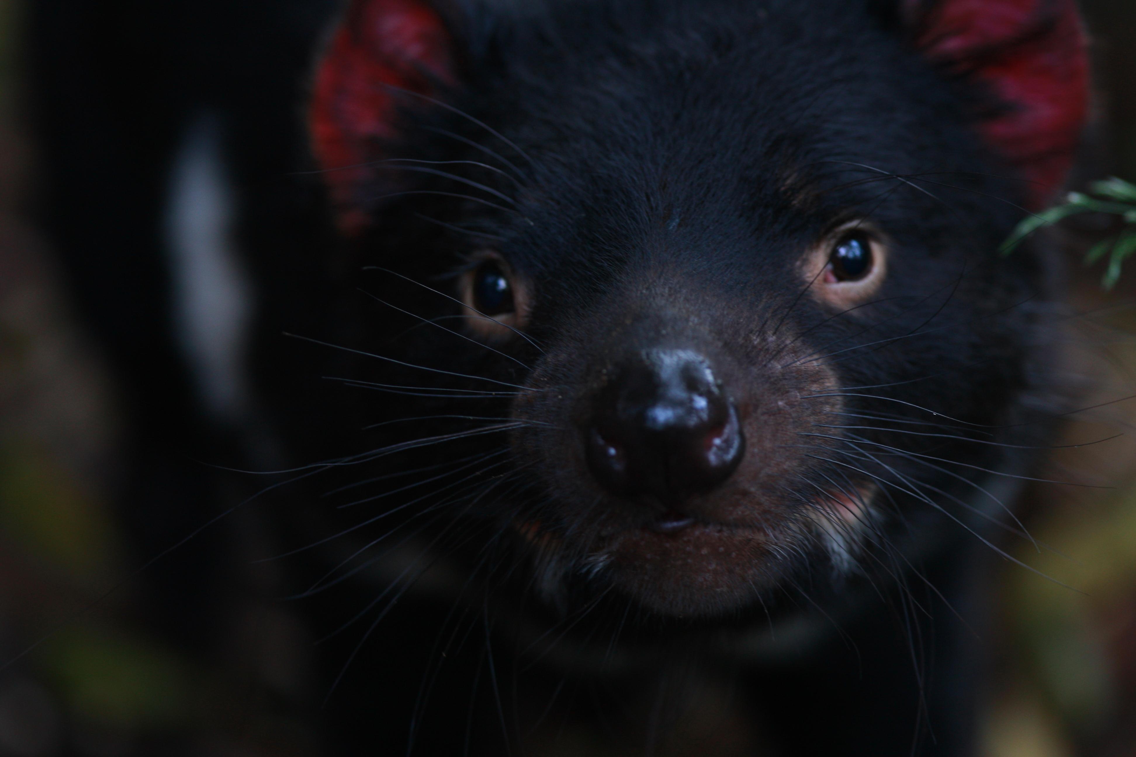 Australia_Wildlife_22