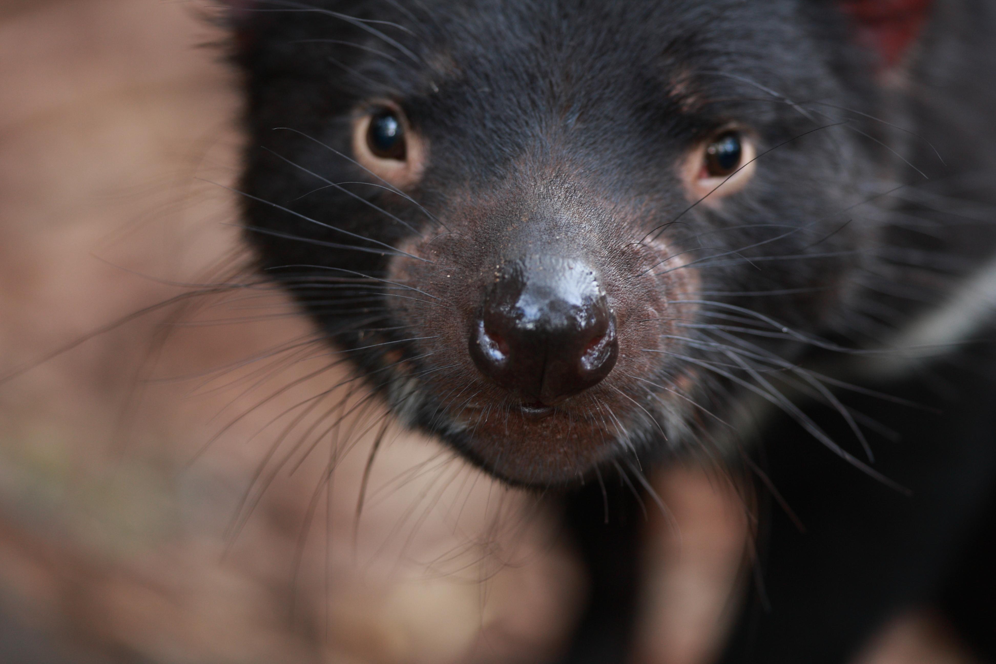 Australia_Wildlife_23