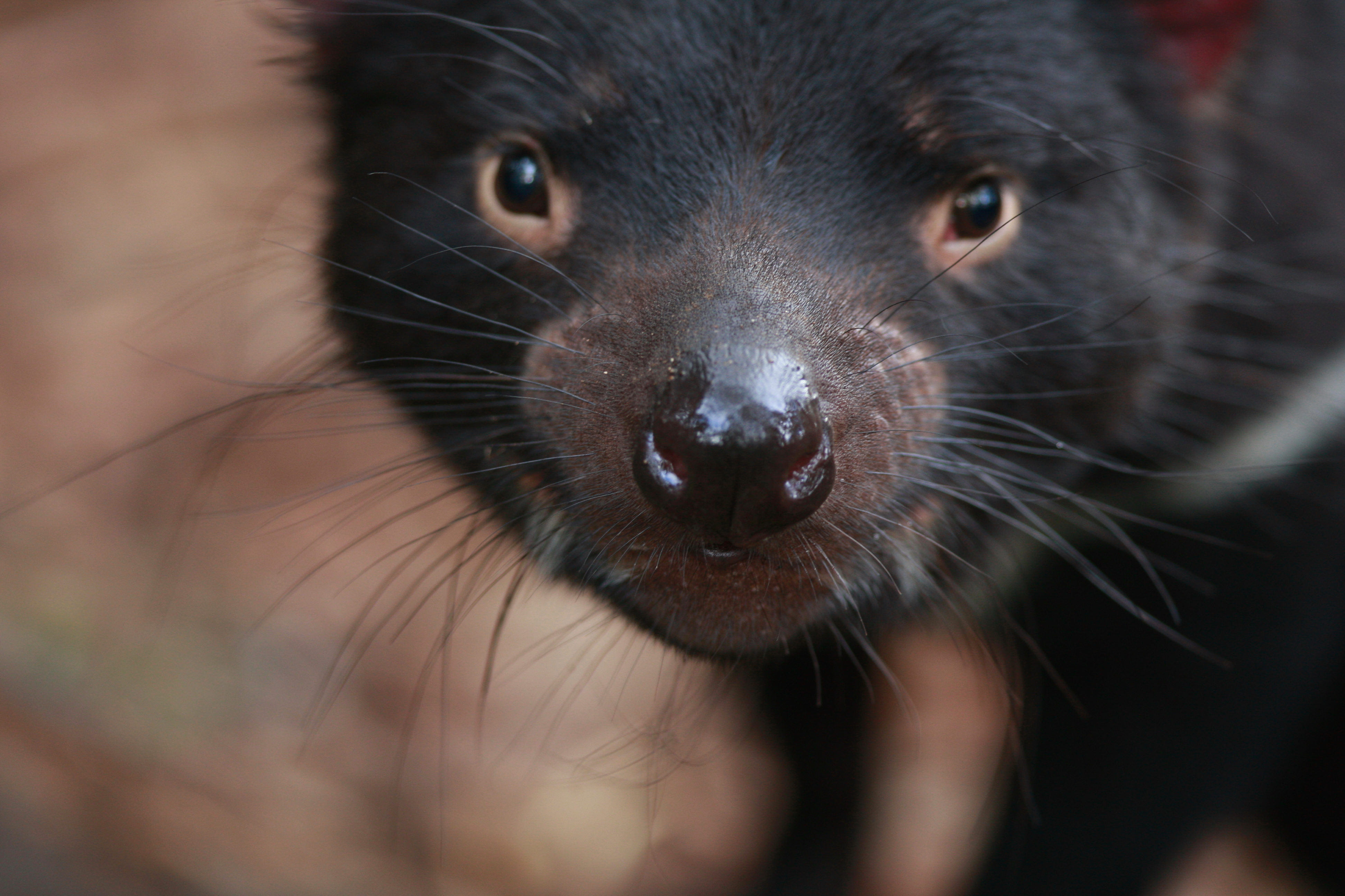 Australia_Wildlife_24
