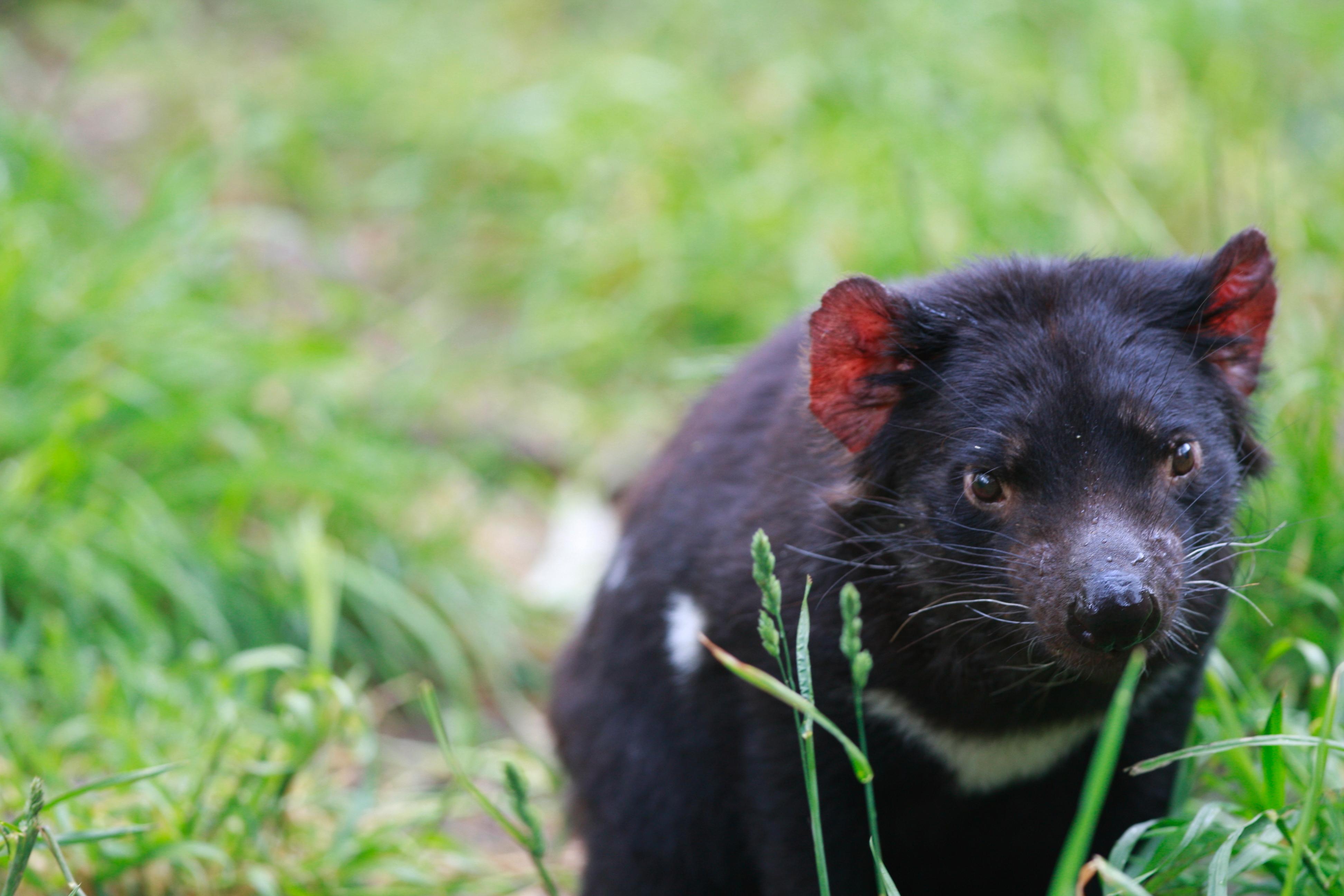 Australia_Wildlife_35