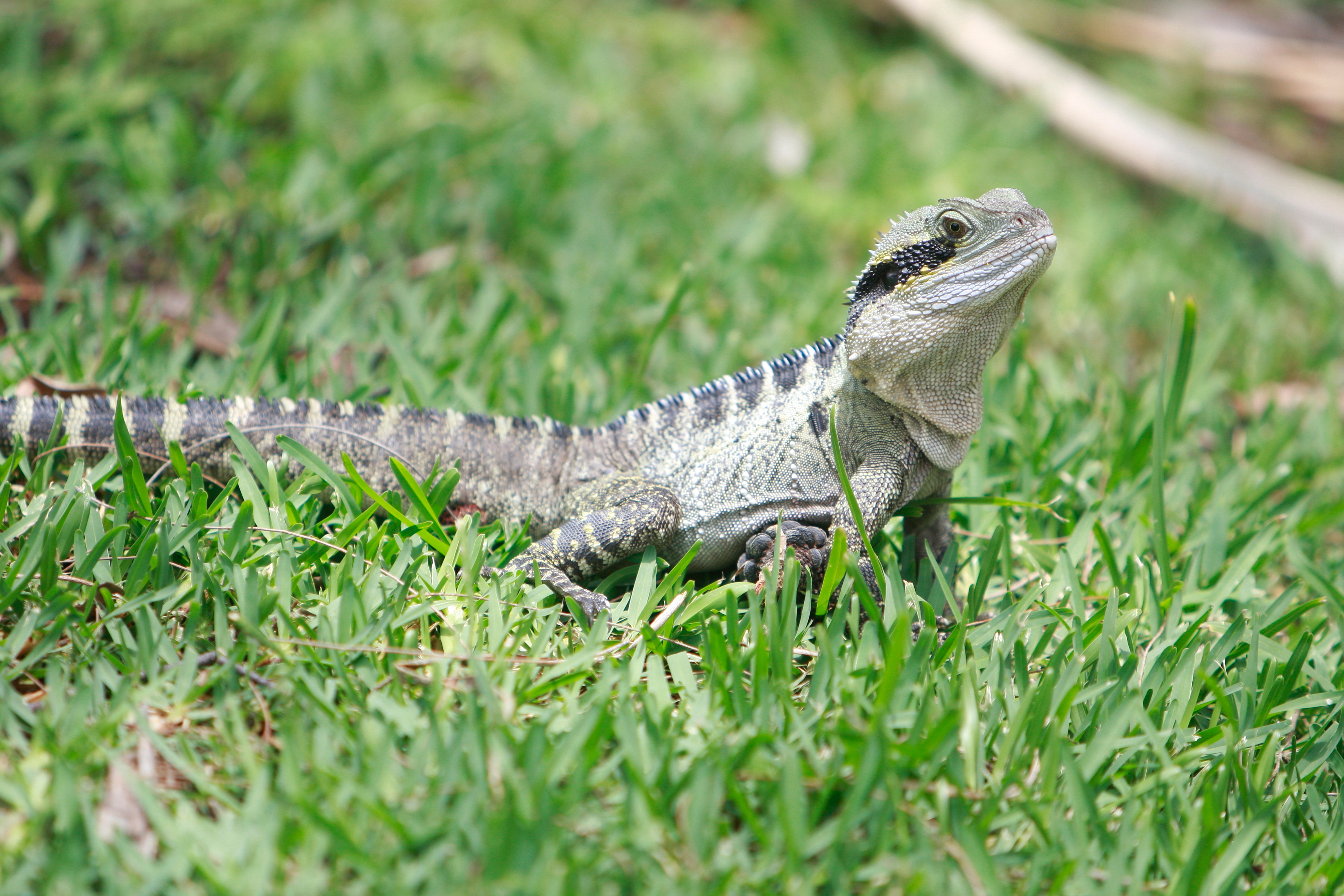 Australia_Wildlife_42