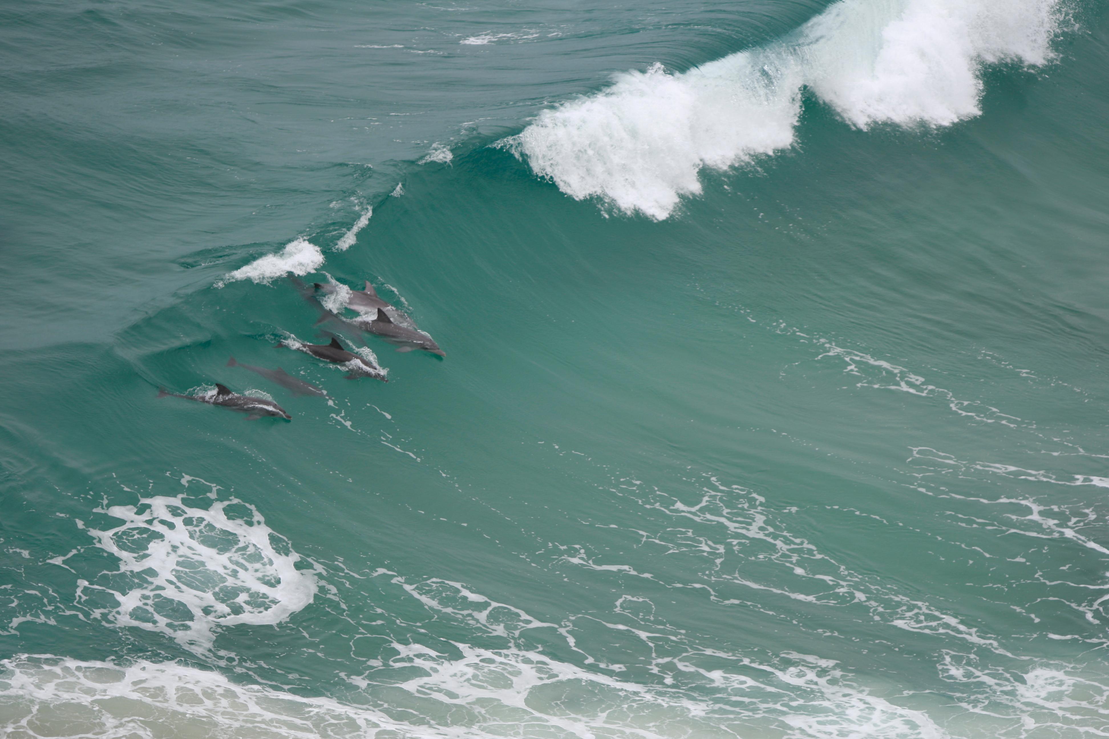 Australia_Wildlife_44