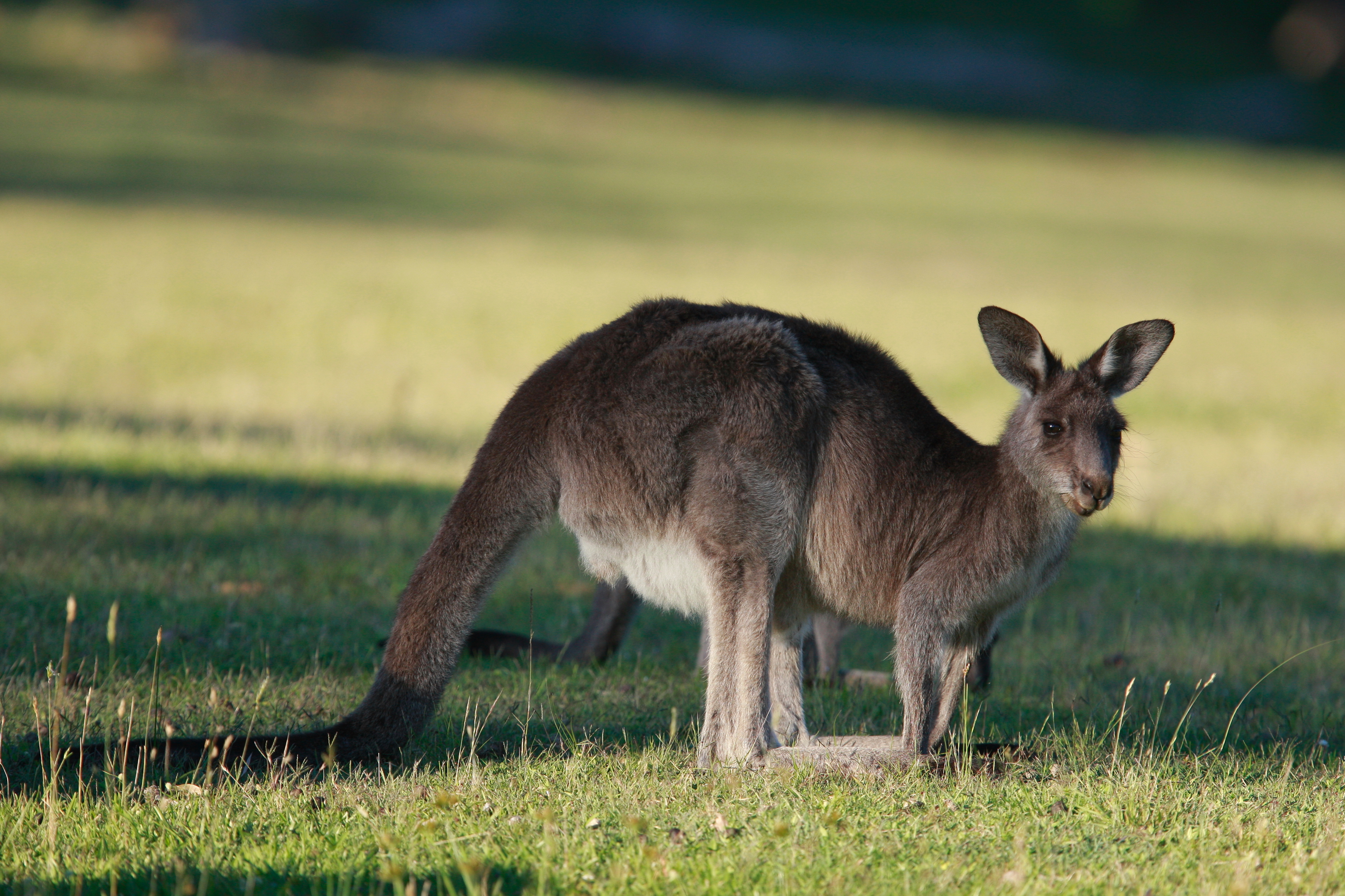 Australia_Wildlife_54