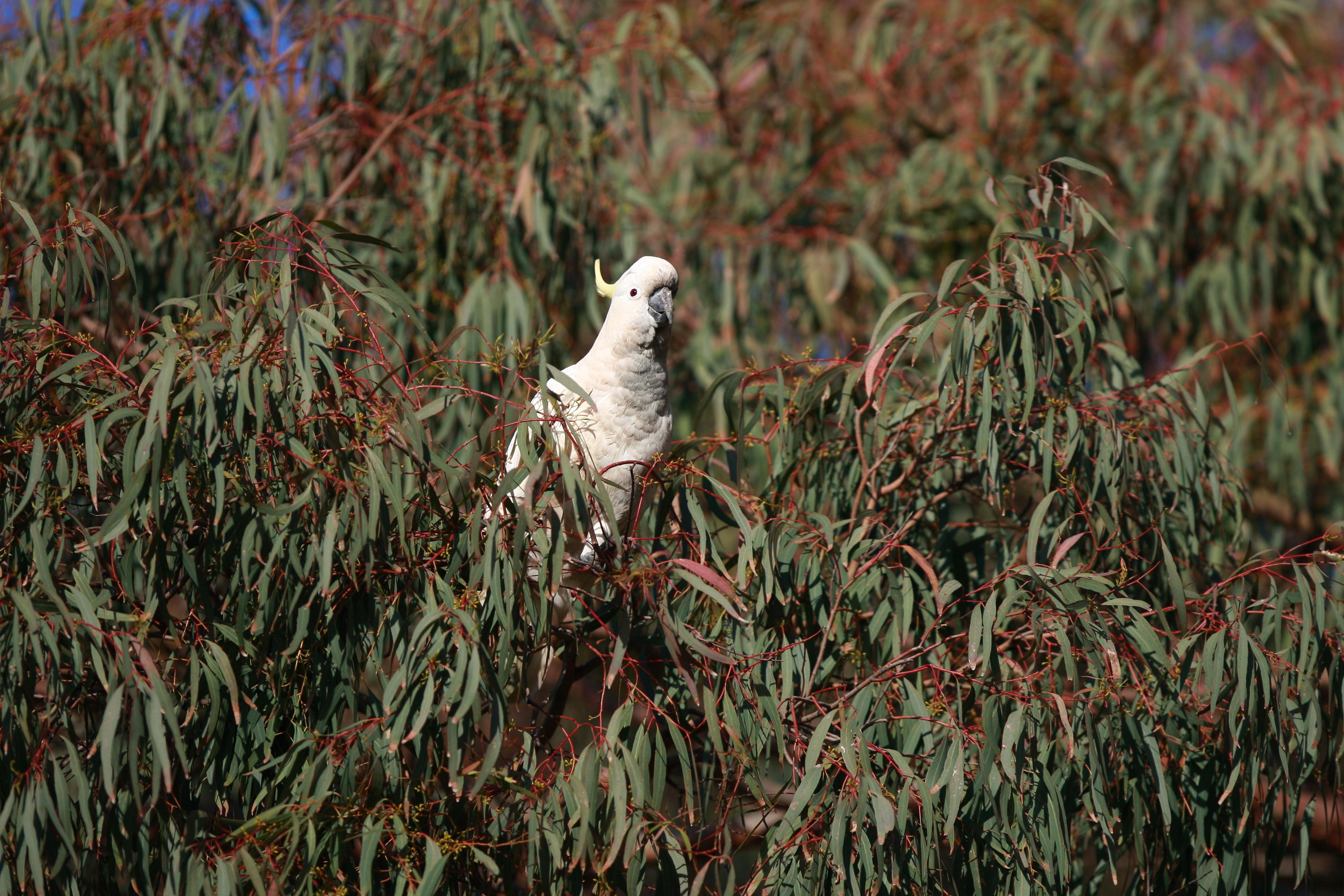 Australia_Wildlife_58