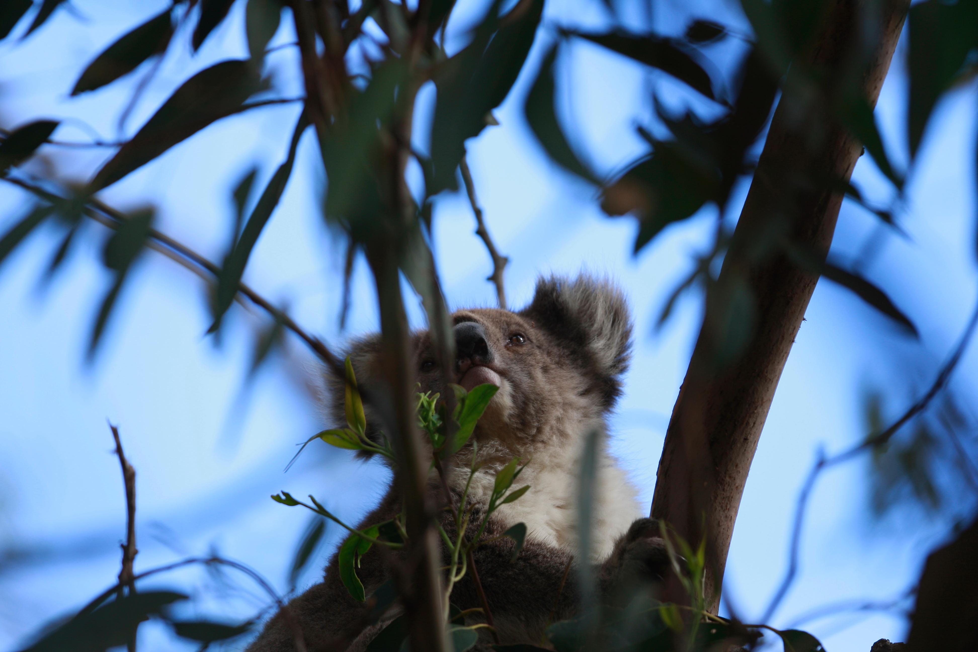 Australia_Wildlife_73