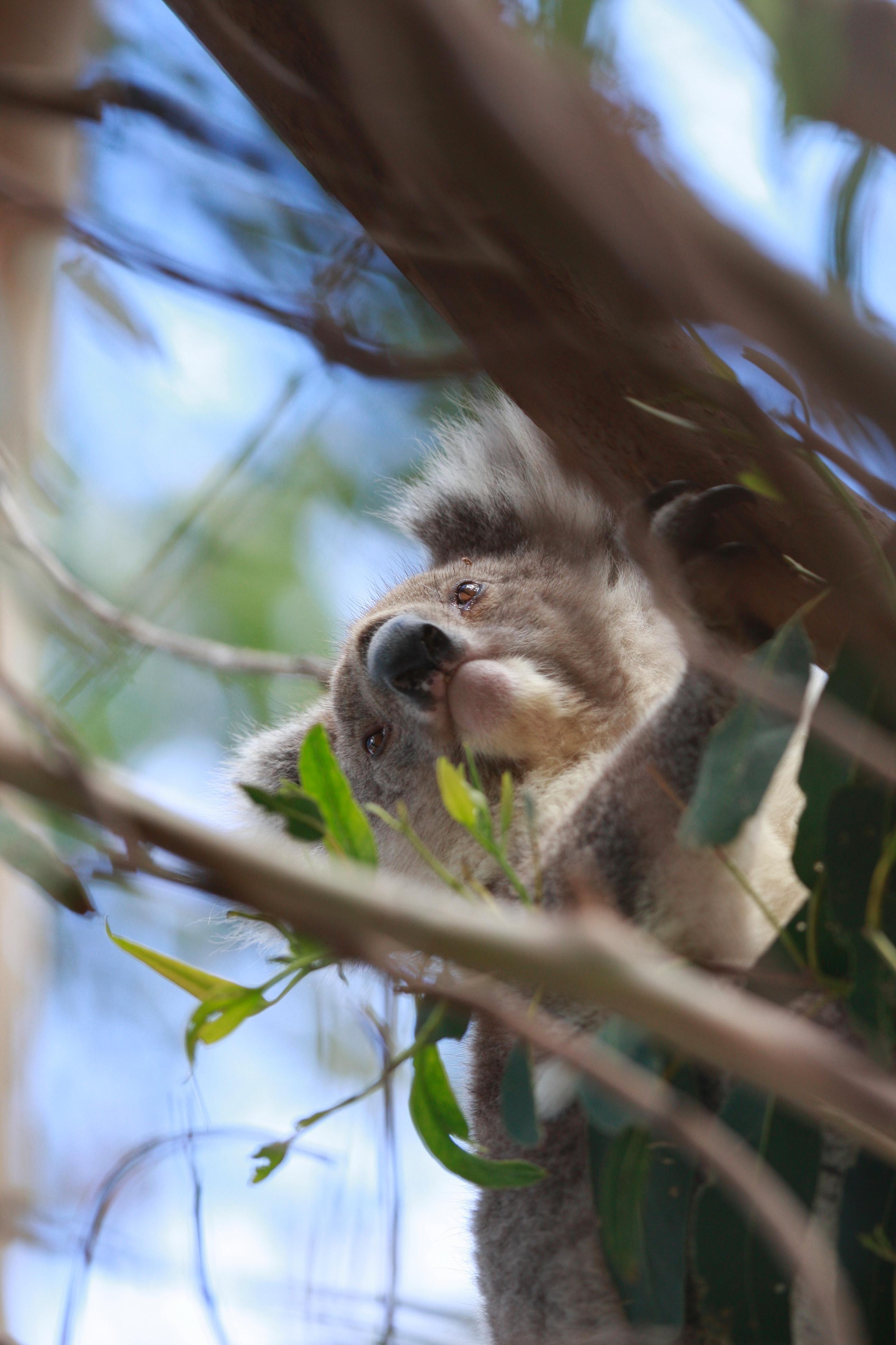 Australia_Wildlife_74