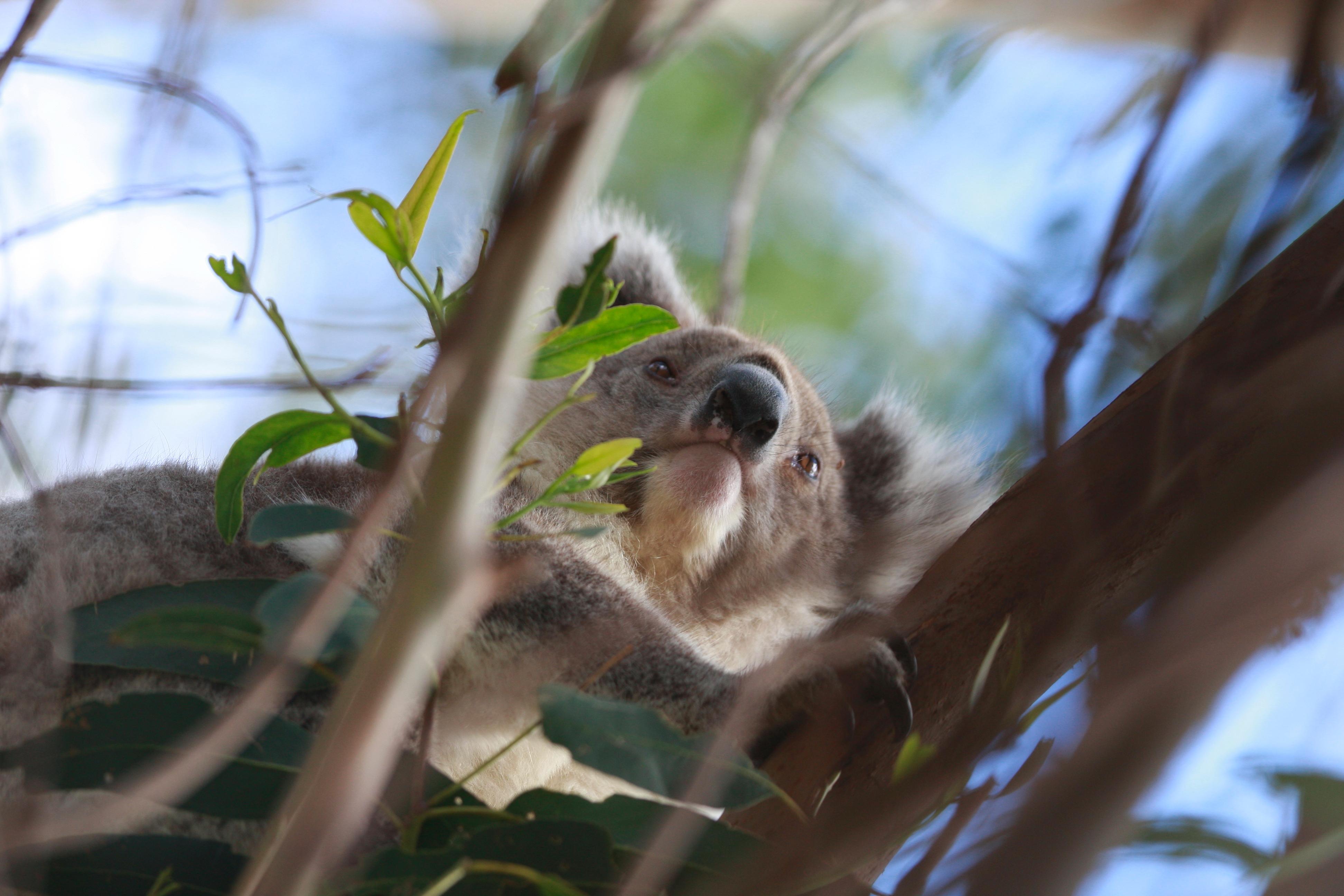 Australia_Wildlife_75