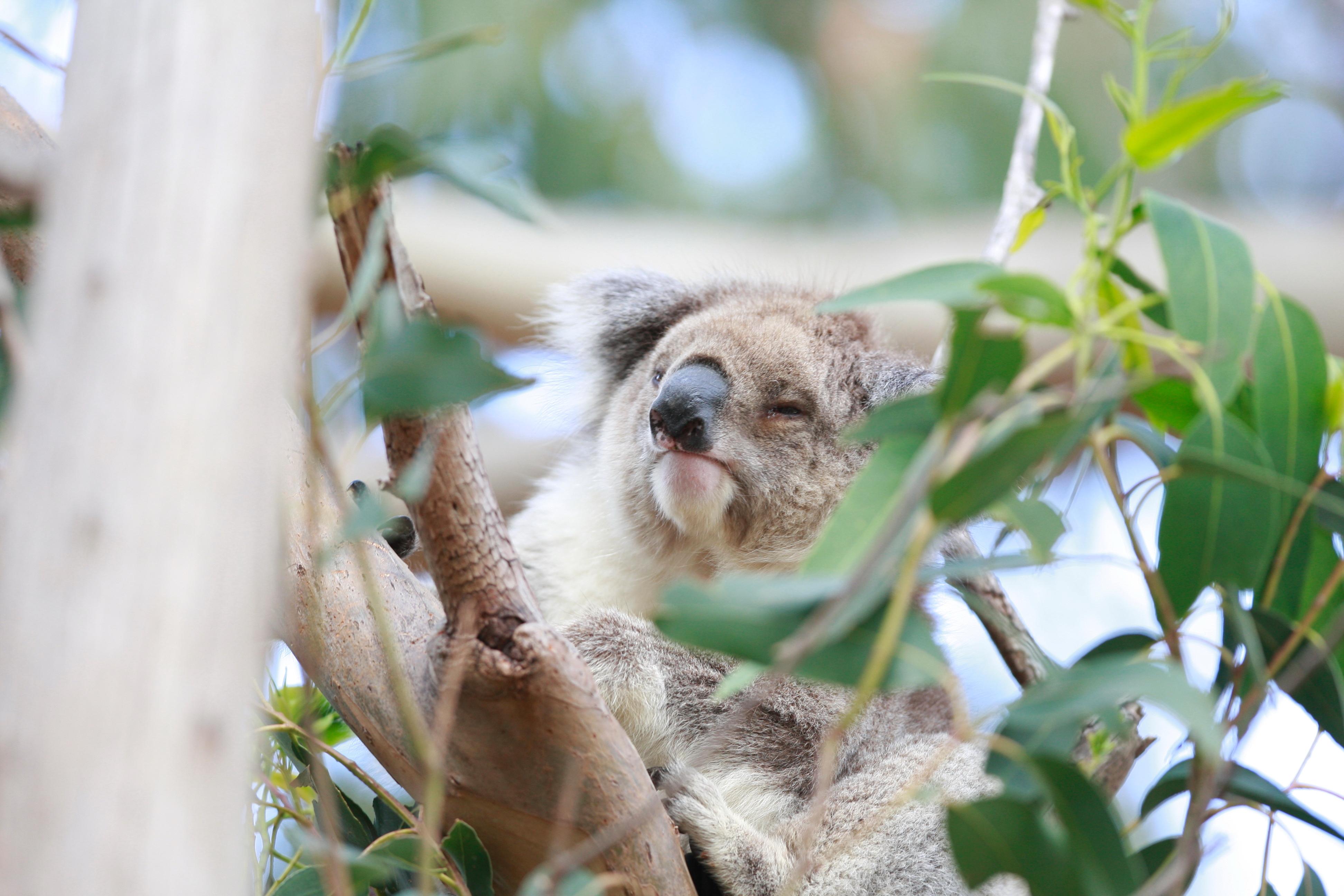 Australia_Wildlife_76